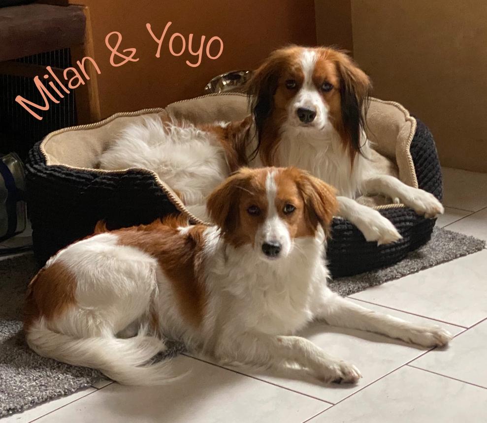 Milan und Yoyo